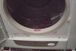 乾燥機に入れる