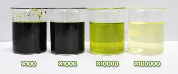 緑色着色料製剤・ハイメロンP-2の水溶希釈例(100倍~10万倍)